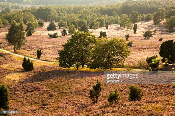 Germany, Lower Saxony, Lueneburg Heath