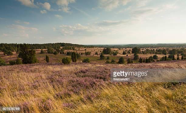 Germany, Lower Saxony, Lueneburg Heath
