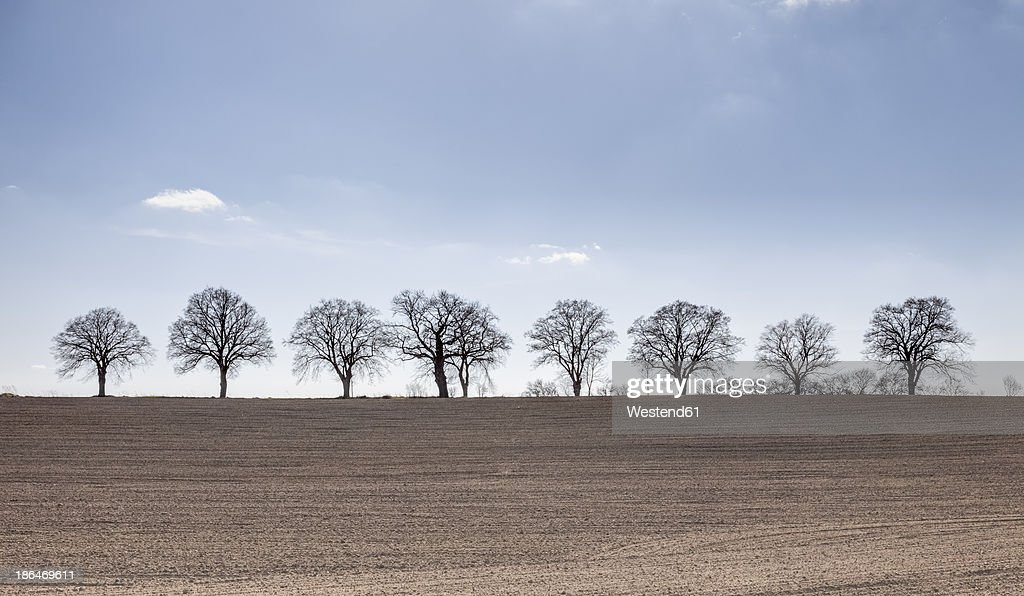 Germany, Mecklenburg Vorpommern, Trees in field during spring : Stock Photo