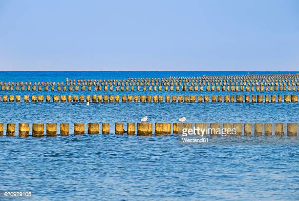 Germany, Mecklenburg-Western Pomerania, Prerow, Baltic Sea, breakwater, Western Pomerania Lagoon Area National Park