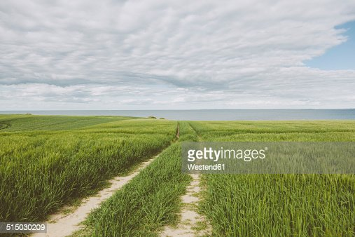 Germany, Mecklenburg-Western Pomerania, Redewisch, Baltic Sea, Grain field, Field path
