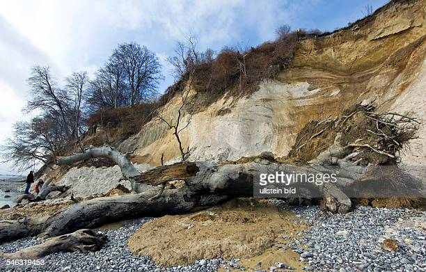 Germany MecklenburgWestern Pomerania Sassnitz The erosion of the chalk cliffs in the national park at the island of Ruegen