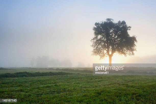 Germany, Nennig, View of mowed field at sunrise