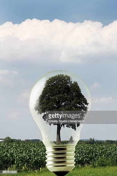 Germany, North Rhine-Westphalia, Hambach, Tree in lightbulb, close-up