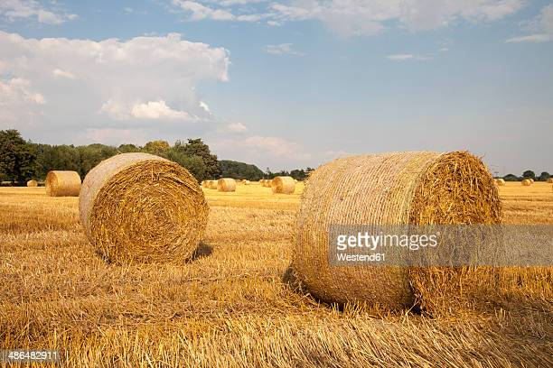 Germany, North Rhine-Westphalia, Kamen, straw bales on stubble field