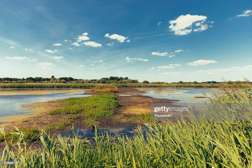 Germany, North Rhine-Westphalia, Rieselfelder Munster, nature preserve