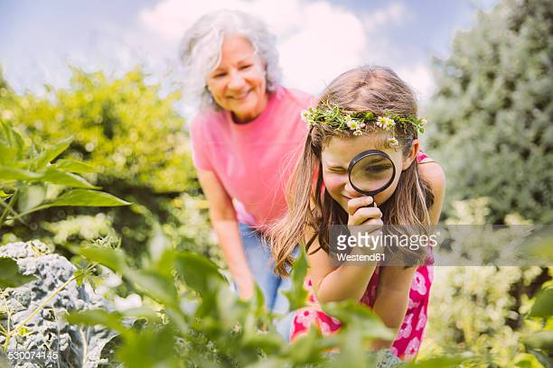 Germany, Northrhine Westphalia, Bornheim, Grandmother and granddaughter working in vegetable garden