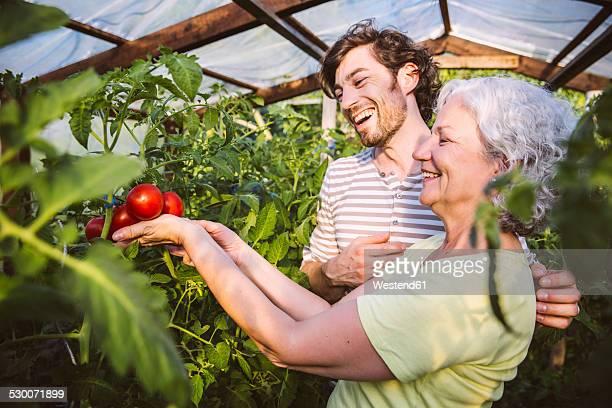 Germany, Northrhine Westphalia, Bornheim, Man and woman admiring ripe tomatoes in greenhouse