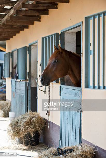 Germany, NRW, Korchenbroich, Horse in stable