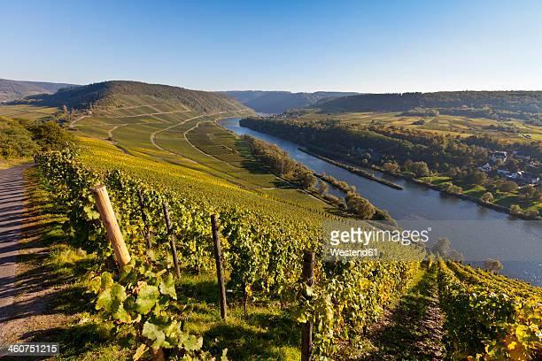 Germany, Rhineland Palatinate, View of vineyards at Punderich