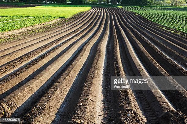 Germany, Rhineland-Palatinate, furrows of an asparagus field