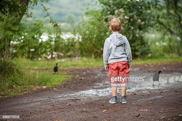 Germany, Rhineland-Palatinate, Laacher See, boy looking at two ducks
