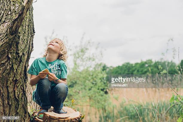Germany, Saxony, boy crouching on tree stump looking up