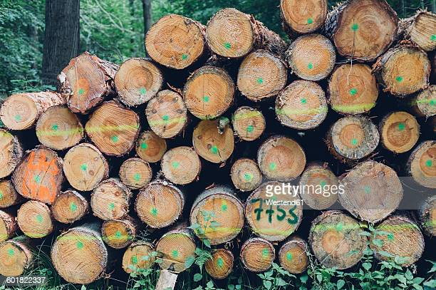 Germany, Saxony, stack of logs in forest