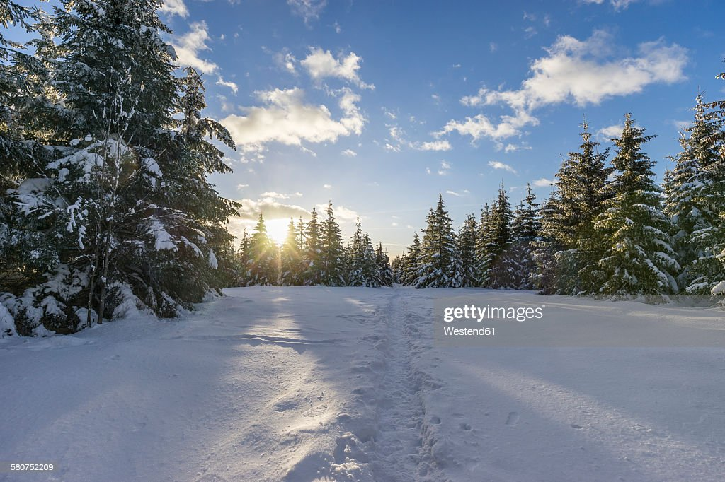 Germany, Saxony-Anhalt, Harz National Park, Landscape in winter, hiking trail in the evening