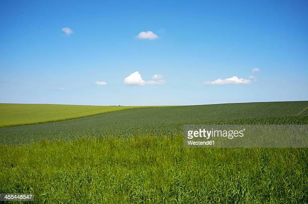 Germany, Schleswig Holstein, View of grassland