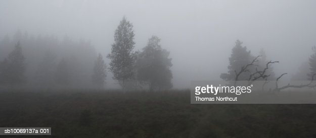 Germany, Schwarzwald, forest in fog : Stock Photo