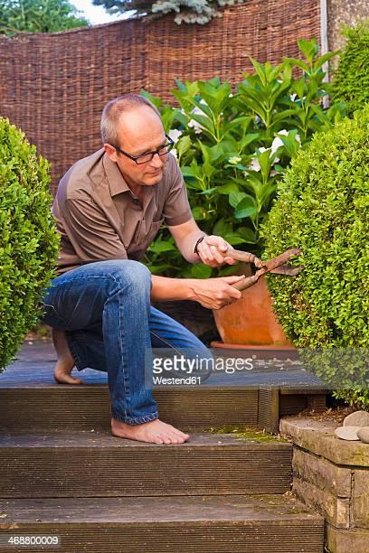 Germany, Stuttgart, Man cutting box tree