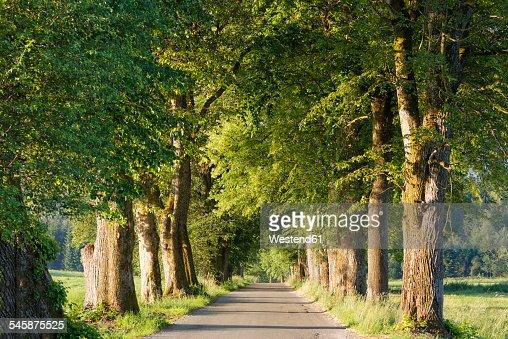 Germany, Upper Bavaria, Bad Heilbrunn, Nantesbuch, tree-lined road