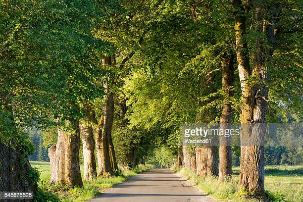 Germany, Upper Bavaria, Bad Heilbrunn, Nantesbuch, tree-lined road