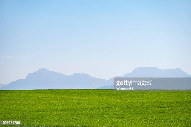 Germany, Upper Bavaria, Green meadow with Alps in background