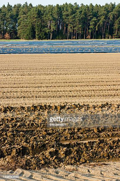 Germany, View of aspargus cultivation in late march