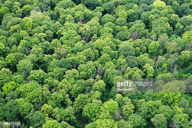 Germany, View of forest at Oppin