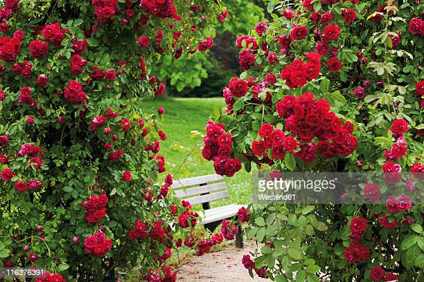 Germany, View of rose garden
