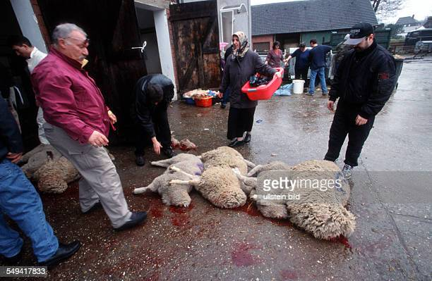 At the edge of the Ruhr area Islamic sacrifice celebration at the sheep farm and slaughtery of family Stratmann Mehemt Evim is allowed with a...
