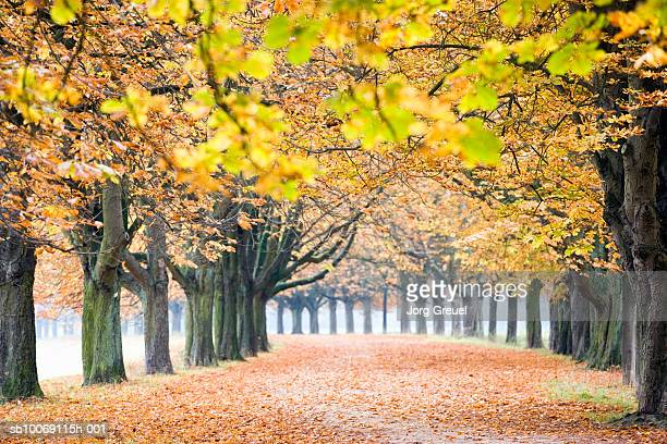 Germany, Westphalia, North-Rhine, Cologne, Chestnut trees in autumn