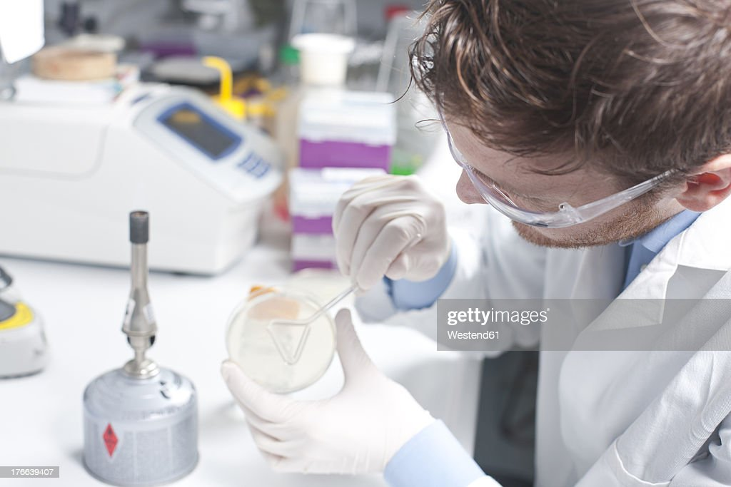 Germany, Young scientist examining bacteria in petri desh : Stock Photo