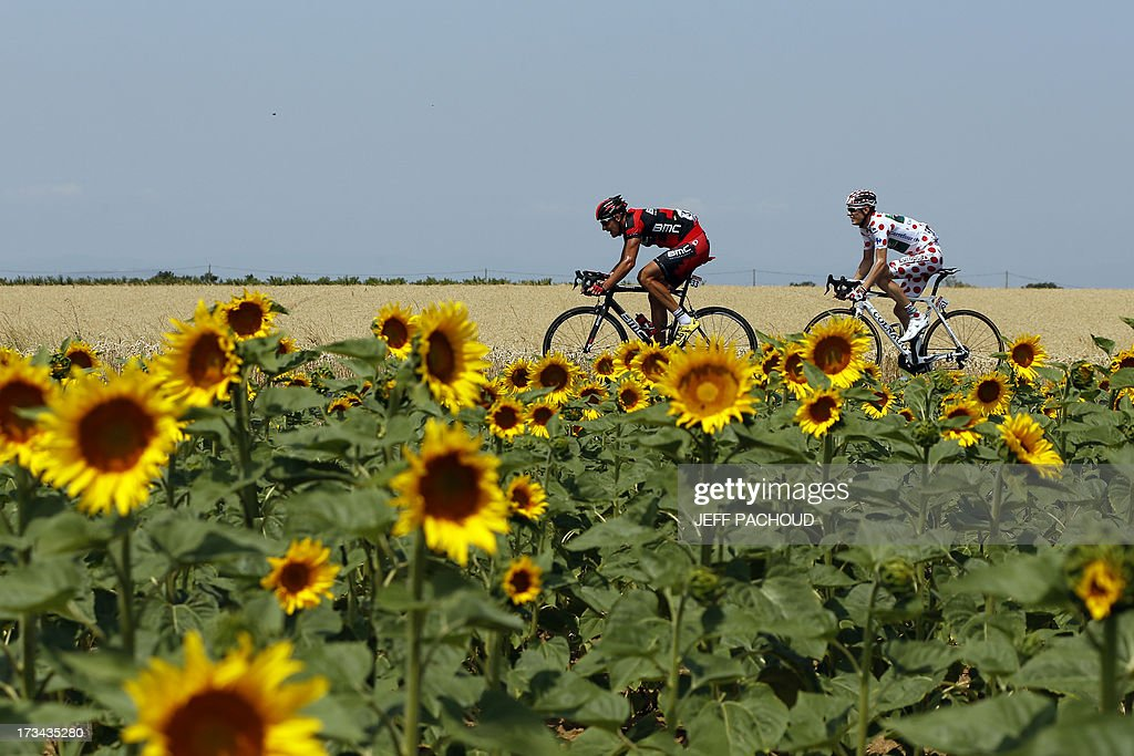 Germany's Marcus Burghardt (C) and best climber's polka dot jersey France's Pierre Rolland ride in the breakaway past a sunflowers field during the 242.5 km fifteenth stage of the 100th edition of the Tour de France cycling race on July 14, 2013 between Givors and Mont Ventoux, southeastern France. AFP PHOTO / JEFF PACHOUD
