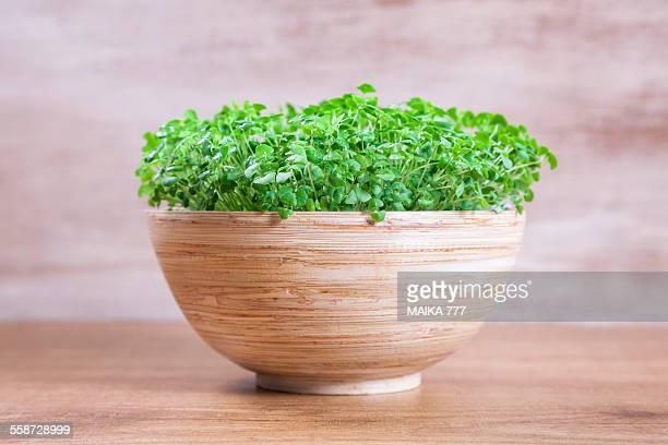 Germinated seeds of Salvia, known as Chia