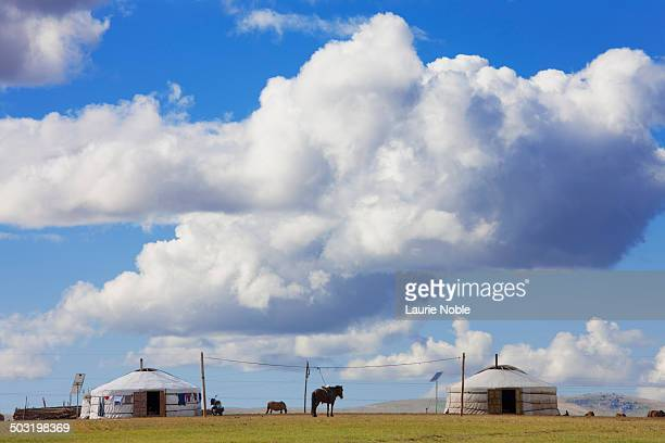 Gers and horse, Orkhon, Central Mongolia