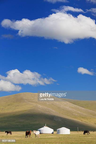 Gers and horses, Orkhon Valley, Central Mongolia