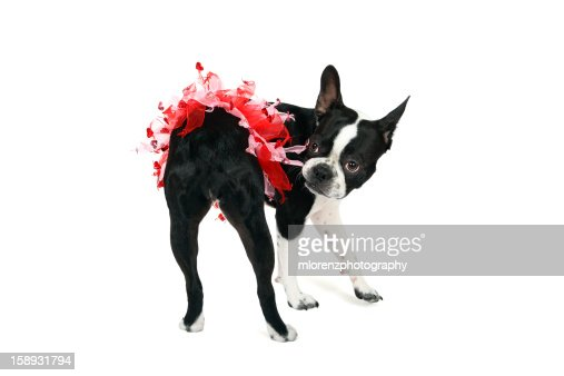 Get this off me! : Stock Photo