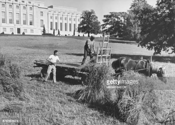 Getreideernst auf dem Areal des Völker bundpalastes 1941