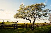 Gettysburg Battle Tree