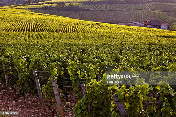 gevrey-chambertin vineyards