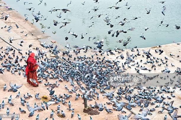 Ghat Pushkar Rajasthan India