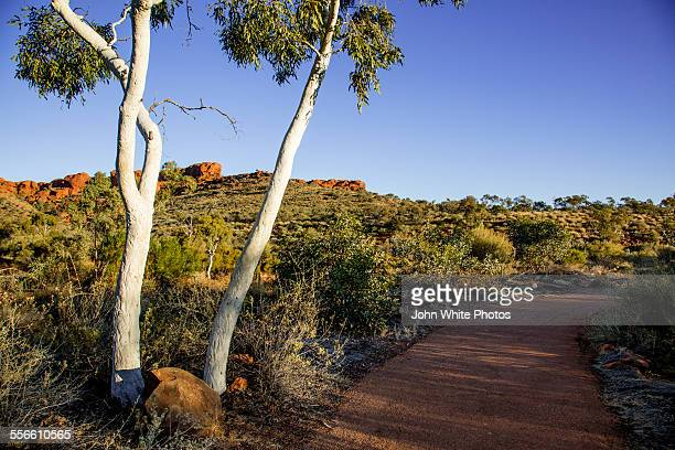 Ghost gums at Kings Canyon, Australia