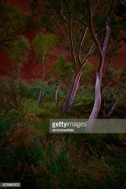 Ghost Trees Of Uluru