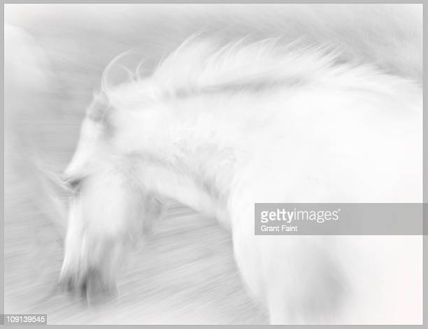 ghostly horse running