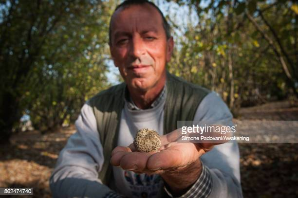 Gianni Monchiero president of the University of truffle dogs in Roddi shows a truffle founded by his dogs on October 17 2017 in the Barolo region...