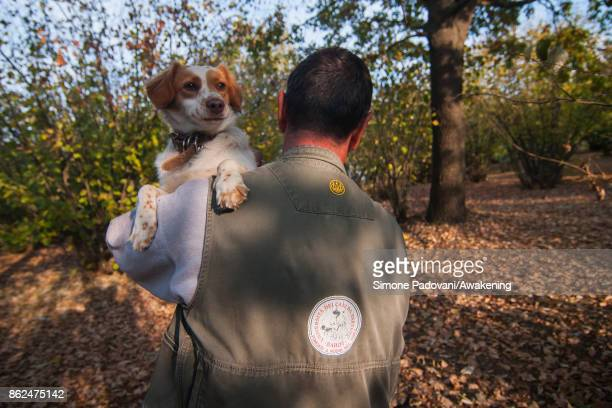 Gianni Monchiero president of the University of truffle dogs in Roddi searchs truffles with his dogs on October 17 2017 in the Barolo region Italy...