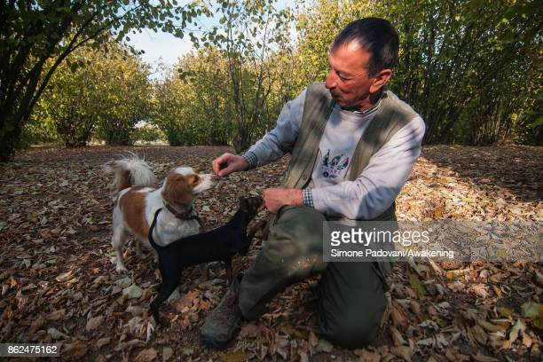 Gianni Monchiero president of the University of truffle dogs in Roddi gives a reward to his dogs after they have found a truffle on October 17 2017...