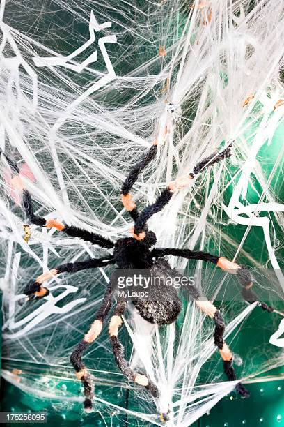 Giant artificial Halloween spider in a web