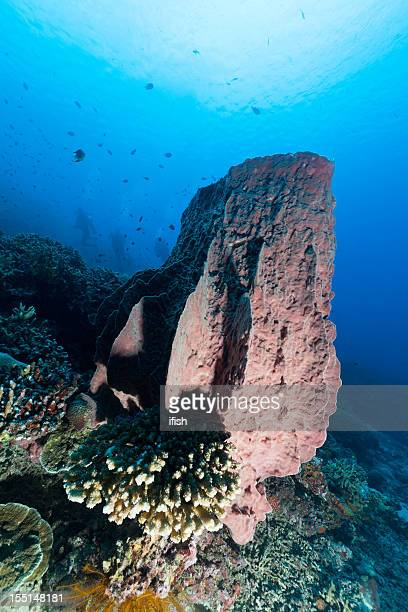 Giant Barrel Sponge and Divers, Bunaken Island, North Sulawesi, Indonesia