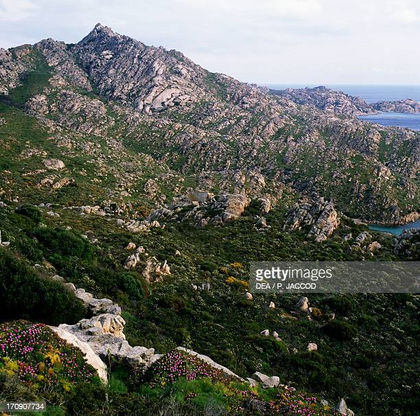Giant fennel and Elands Sourfig Caprera Island La Maddalena Archipelago National Park Sardinia Italy