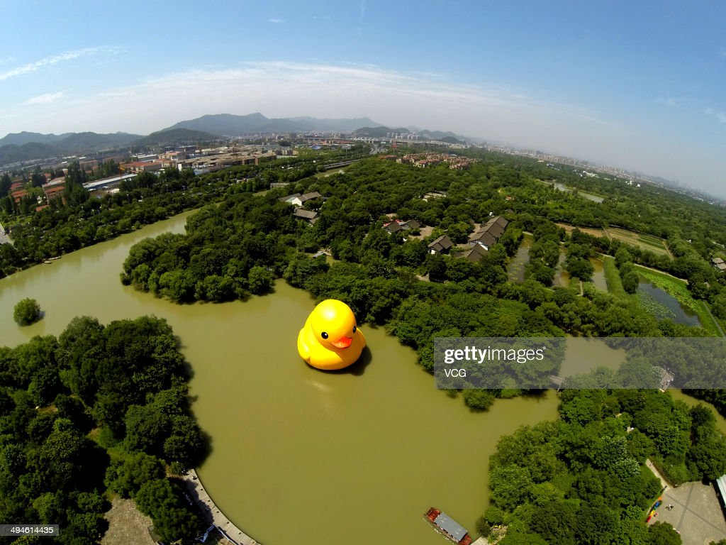 rubber duck arrives in hangzhou photos and images getty images